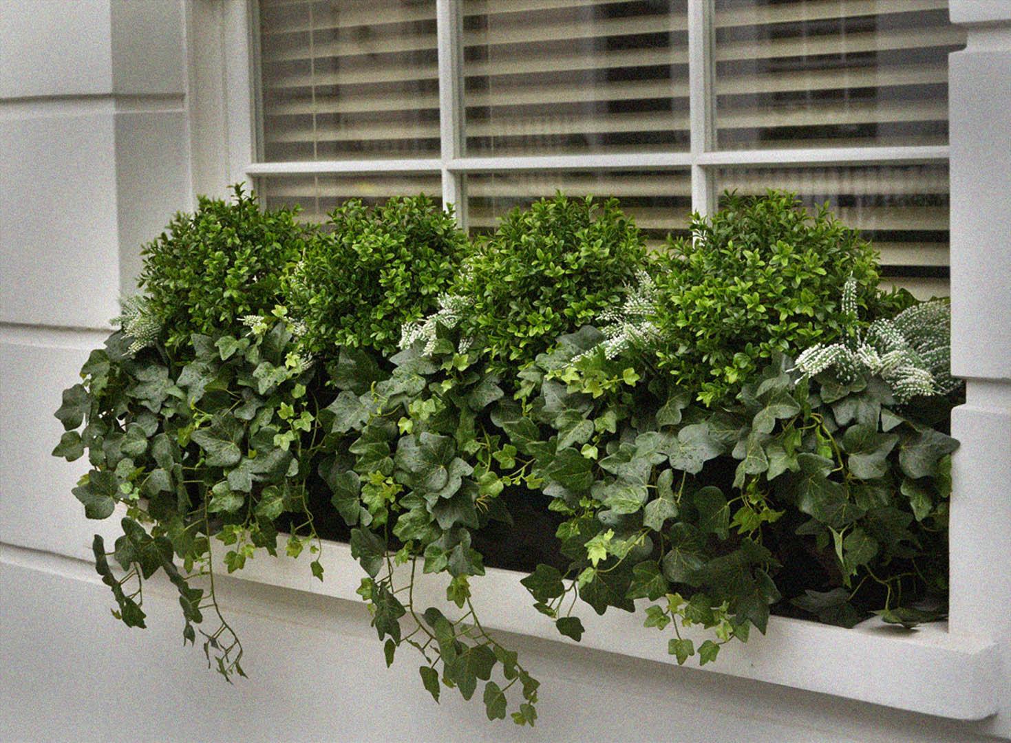 482 fake landscapes custom 110cm ivy, boxwood and erica window box 1080DEF