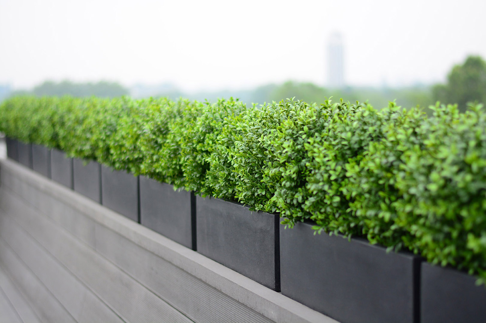 485 Fake Landscapes Connaught soft buxus hedge window boxes