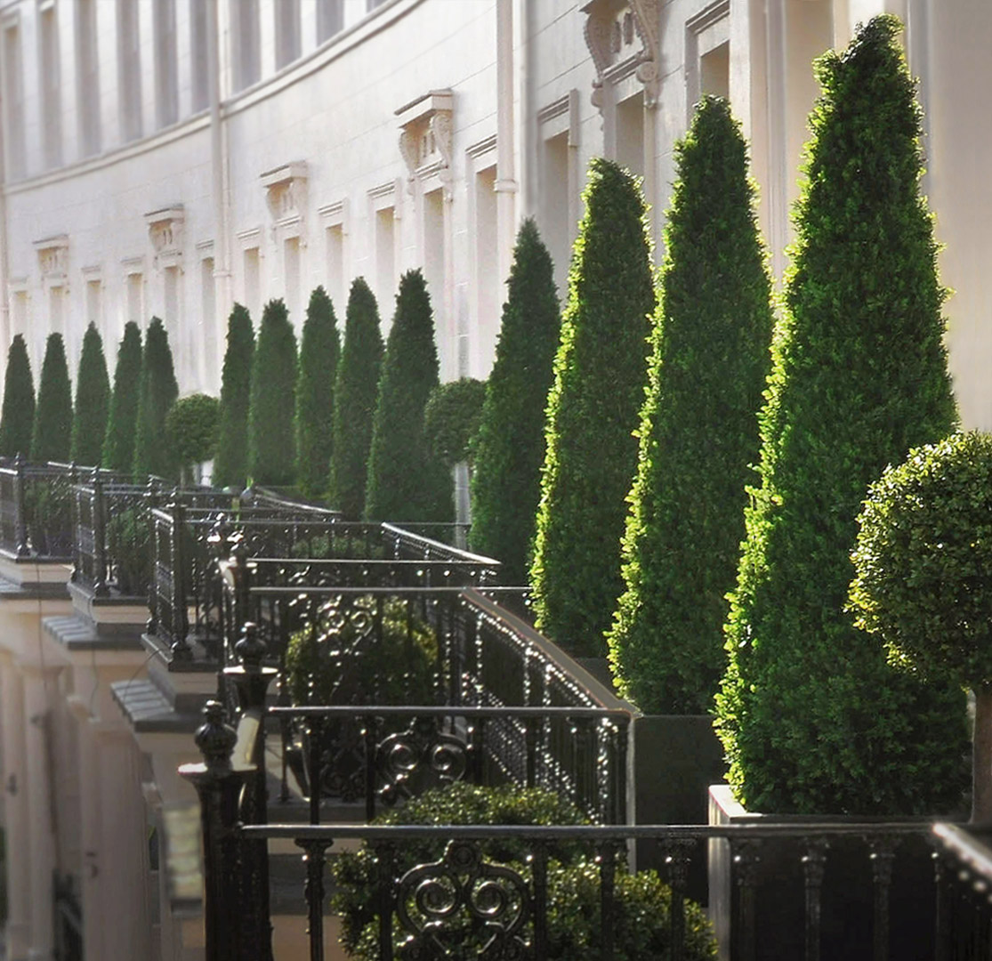 455 Fake Landscapes 350cm cypress trees Grosvenor Crescent balconies SW1