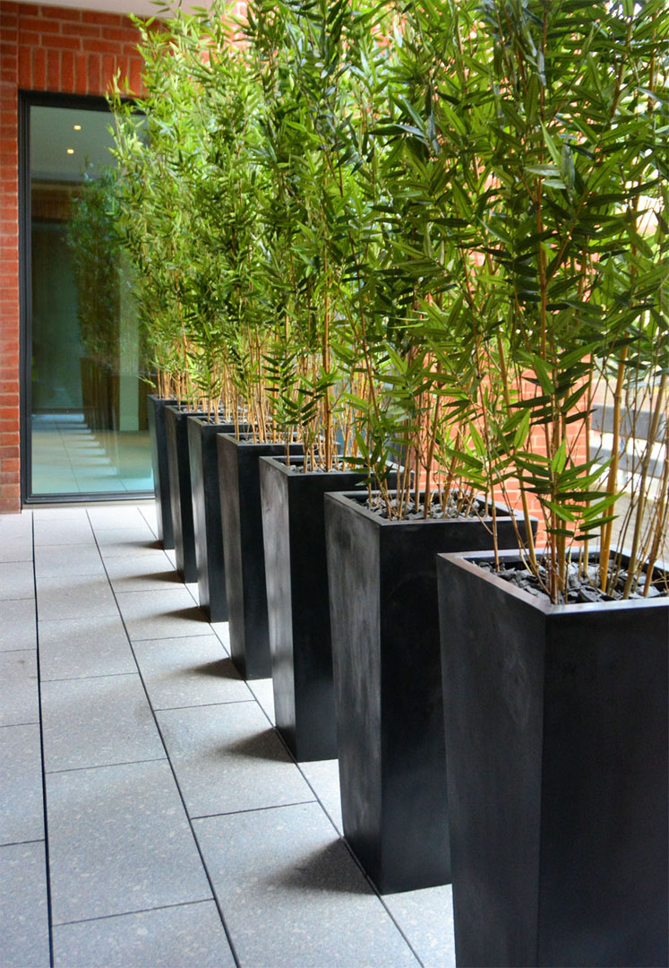 572 Fake Landscapes 190cm oriental bamboo and matt planters