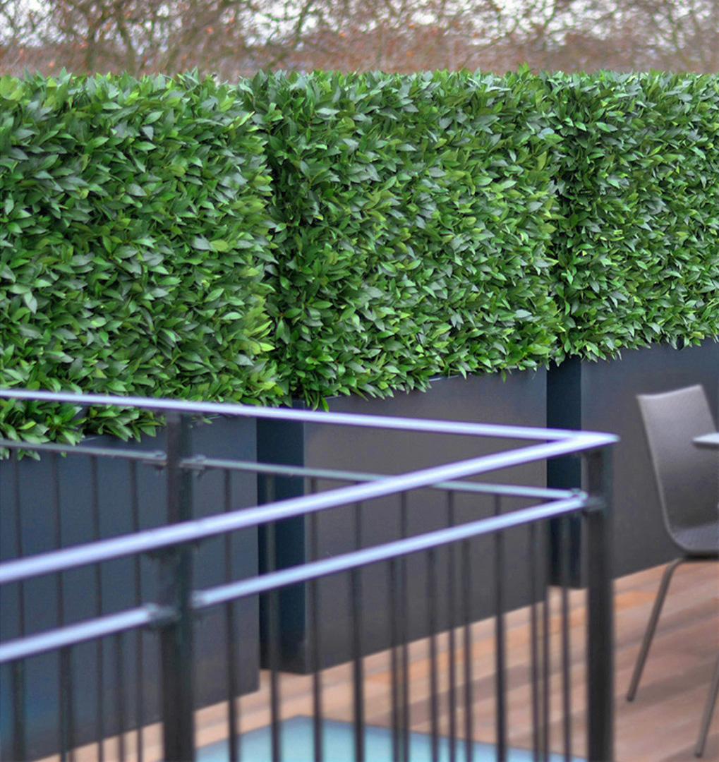 601 Fake landscapes laurel leaf hedge