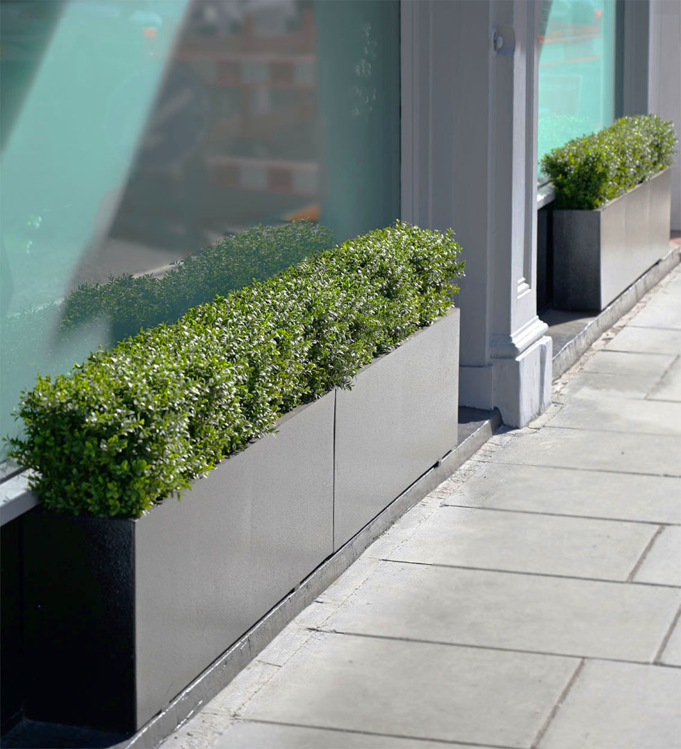 604 Fake Landscapes low unstructured boxwood hedges W8