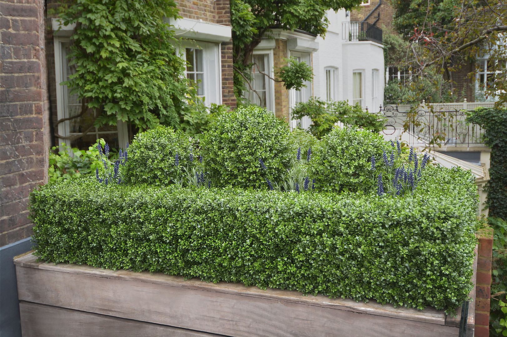609 fake landscapes low inset hedge with balls and lavender