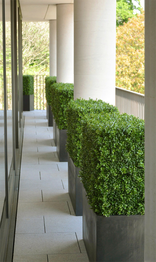 612 fake landscapes 1KG envelope buxus on balcony