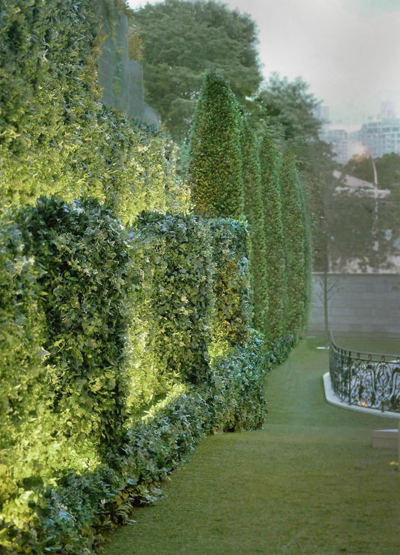 414 Living wall cypresses