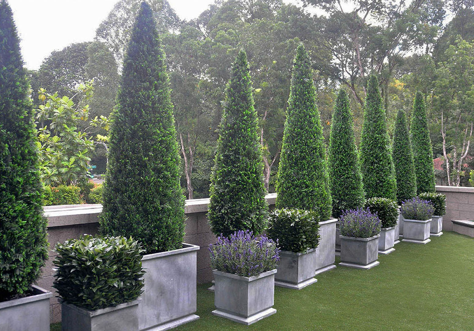 416 Fake Landscapes cypress with bay and lavender Singapore