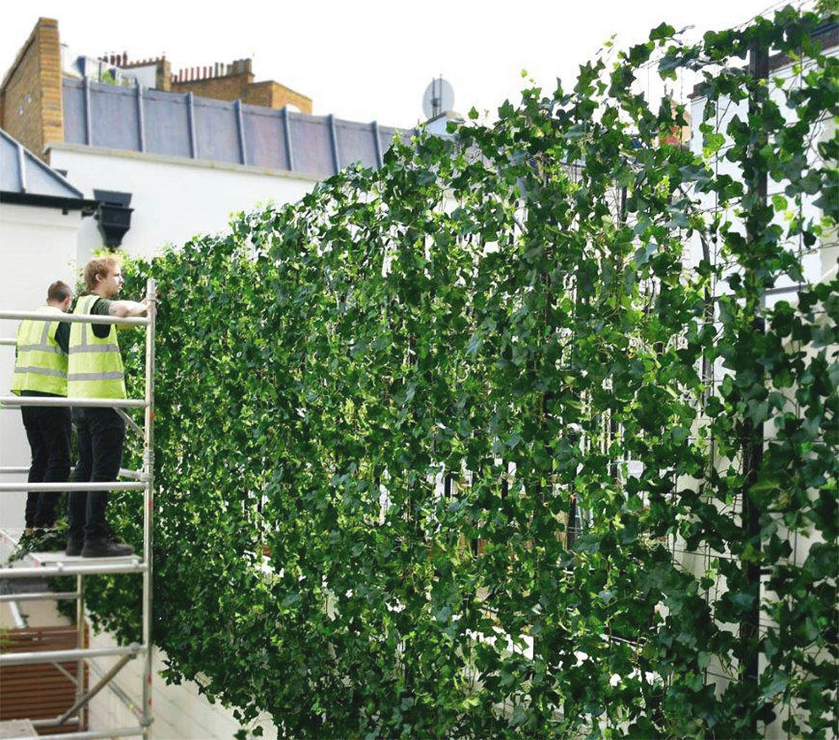 432 fake landscapes UV ivy medium screening mesh 240cm high - Copy