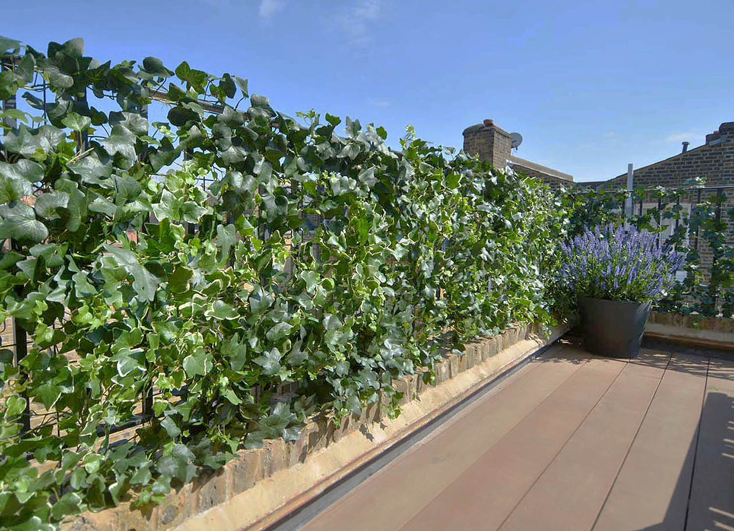 437 Fake Landscapes UV ivy terrace open screening