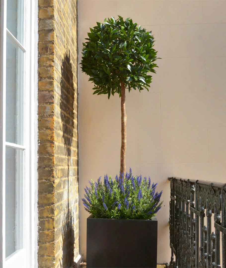 639 small topiary with lavender