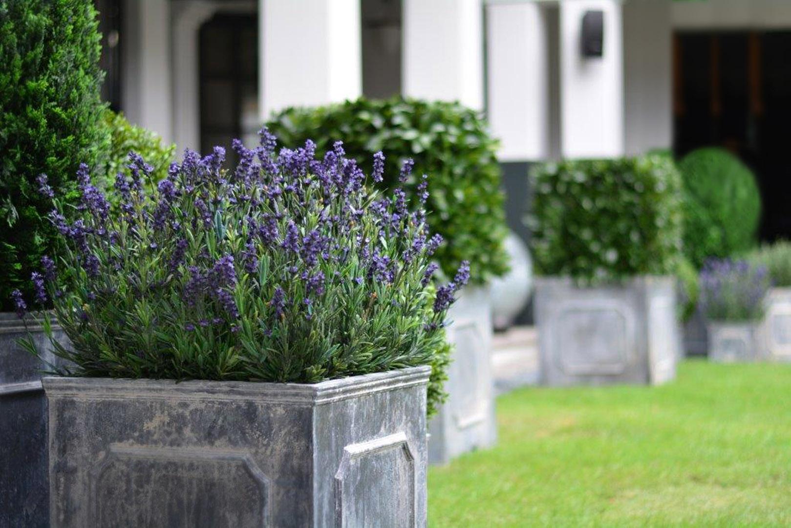 683 dark lavender in cube sing