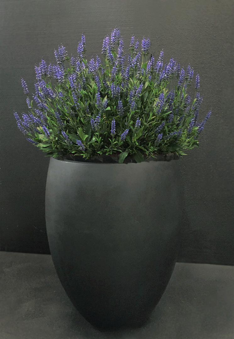 689 lavender bond wip