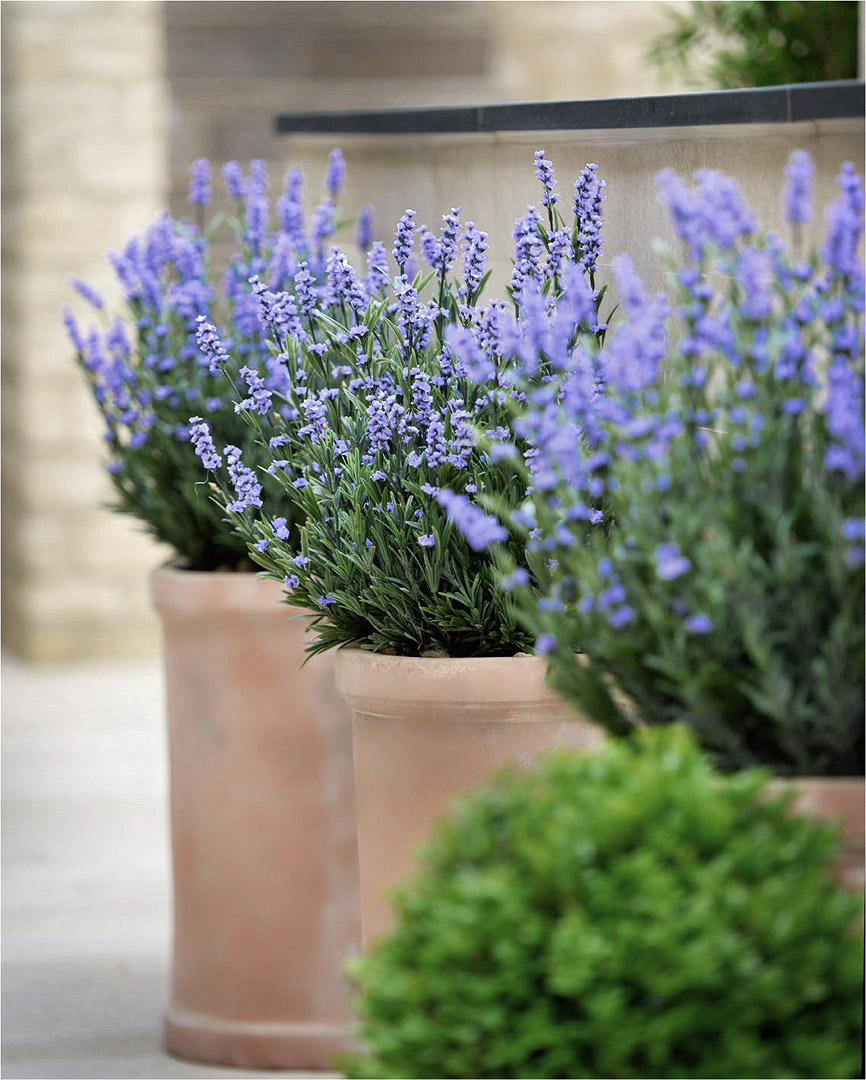692 Fake Landscapes Dormy House lavender in terracotta