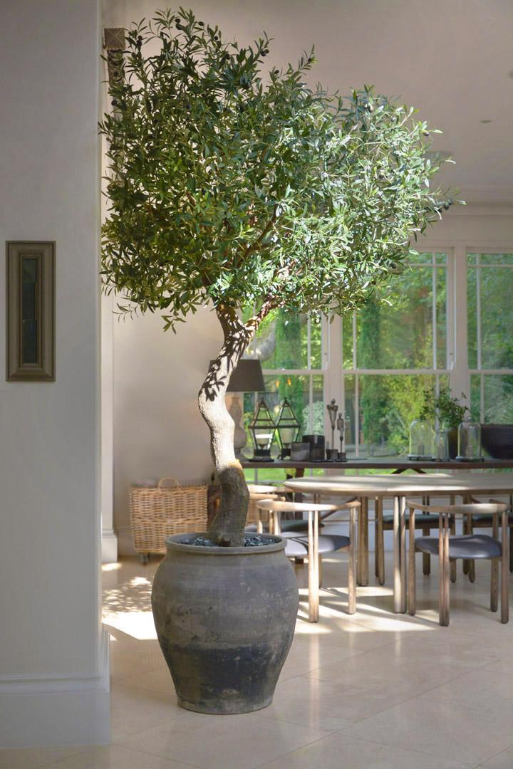 664 fake landscapes 2900mm giant olive in clients planter