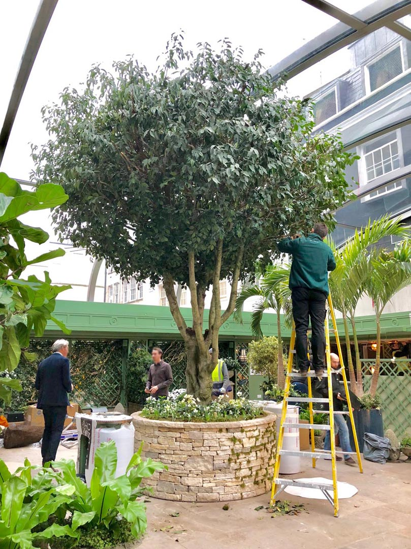 669 fake landscapes hybrid 5m tree Annabels