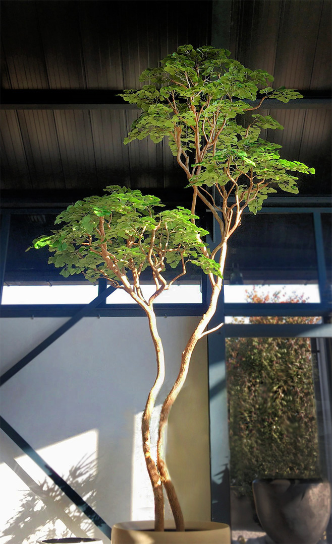 670 fake landscapes 5m twin head long trunk gingko prototype
