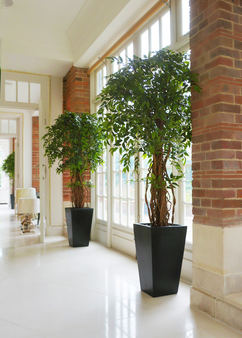 704 fake landscapes 180cm french liana ficus in anthracite