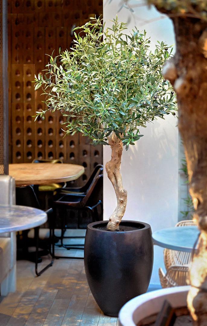 707 fake landscapes 160cm silver olive in 50cm curved planter