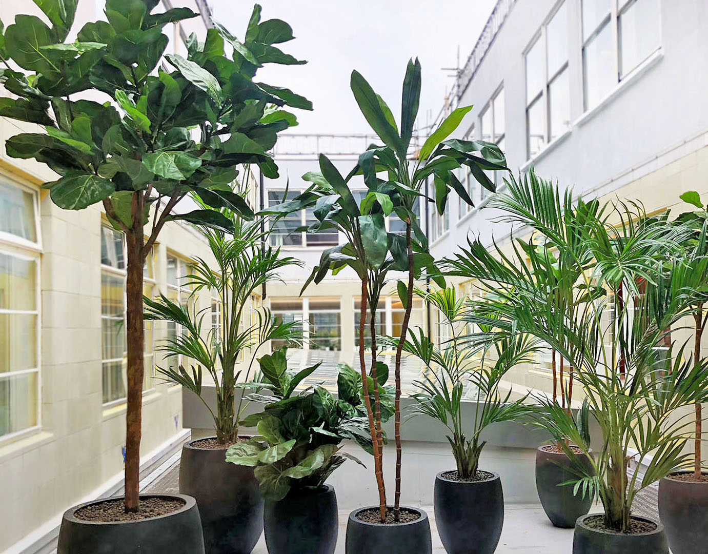 712 fake landscapes cool courtyard tree mix lyrata cordyline and palm at Selfridges