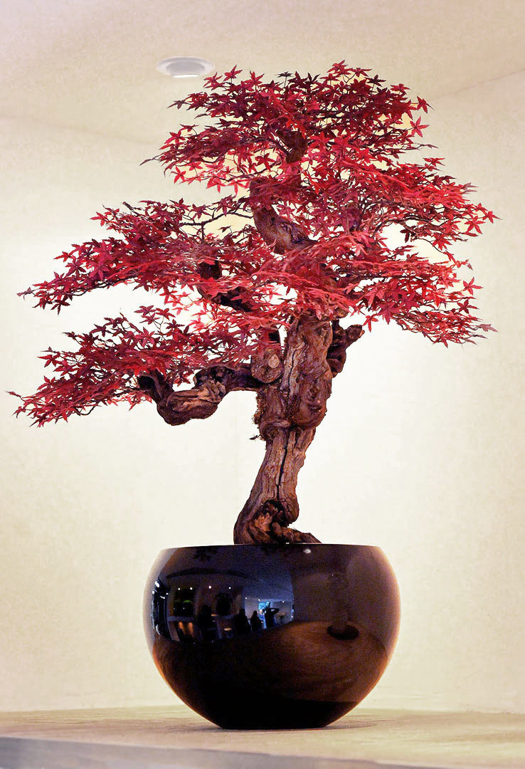 781 fake landscapes 90 cm tall red acer bonsai 1080DEF