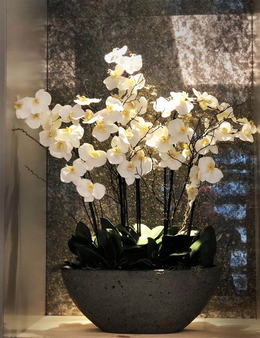 813 regents park orchids
